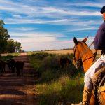 The Uruguayan Gaucho